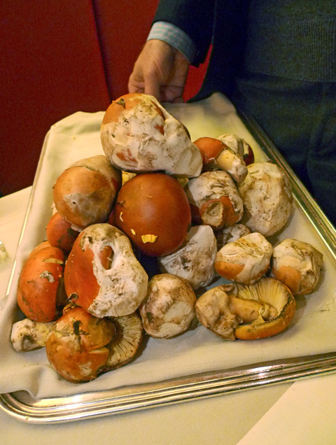 Host Tony May shows off a fortune in rare ovoli 'shrooms. Photo: Steven Richter